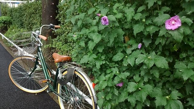 自転車 雨対策 顔